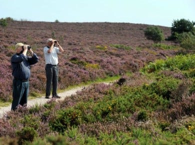 National Trust Dunwich Heath (image source National Trust)