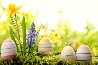 Easter Eggs amongst daffodils