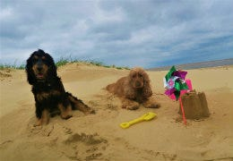 Flossie, Maddie and the Bradshaw Family's Week in Suffolk!