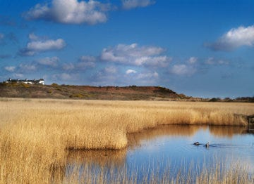 Minsmere in Suffolk