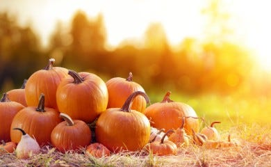Autumn and Winter Events in Suffolk