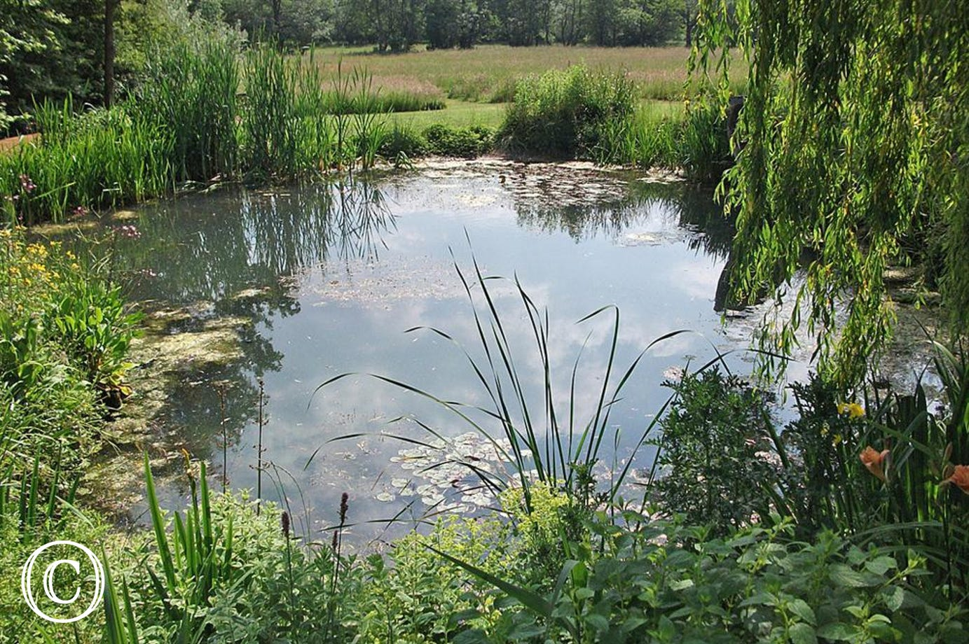 Read a book or write a book by this tranquil pond situated in the grounds for The Stables.
